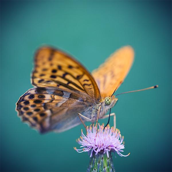 busy butterfly by nakedlady