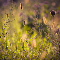 honey meadow by nakedlady