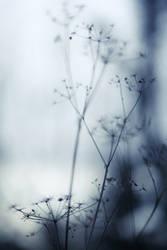 autumnal blues II