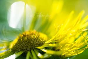 summer sun by nakedlady