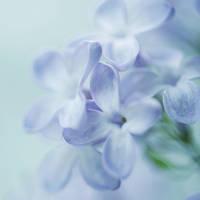 a piece of spring by nakedlady