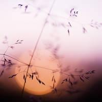 my sunset ... by nakedlady