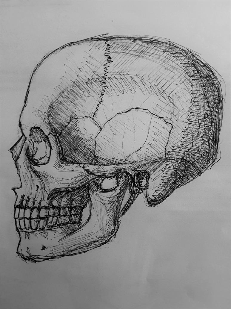 Skull Research Papers - Academia.edu