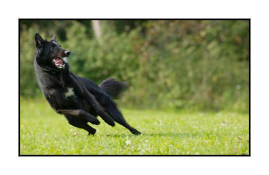Athlete dog