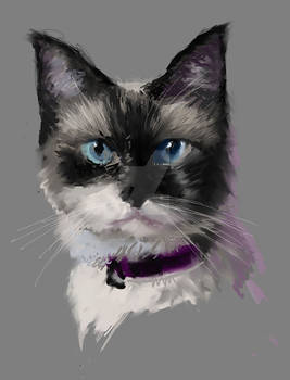Cat Speedpaint
