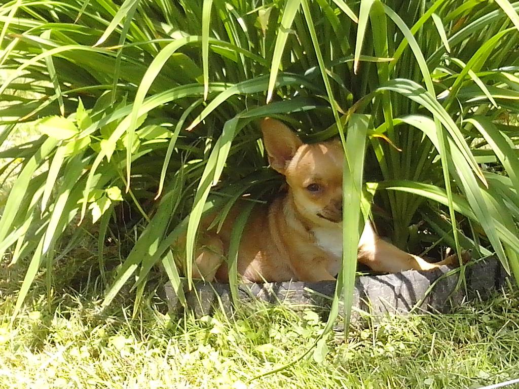 hide and seek by DarkPussyCat