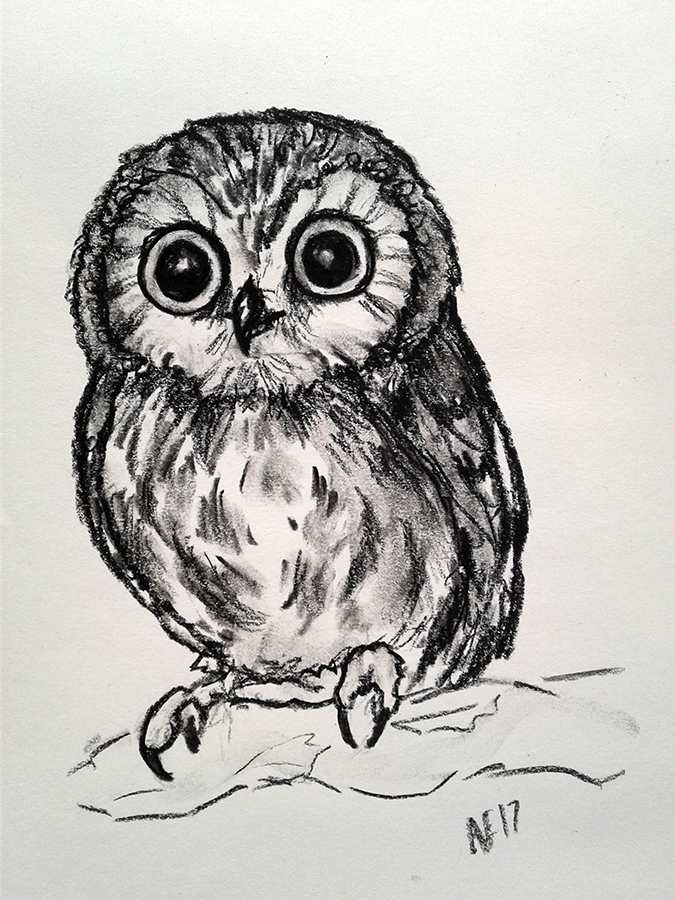 Saw Whet Owl Study by RoxxieDrox