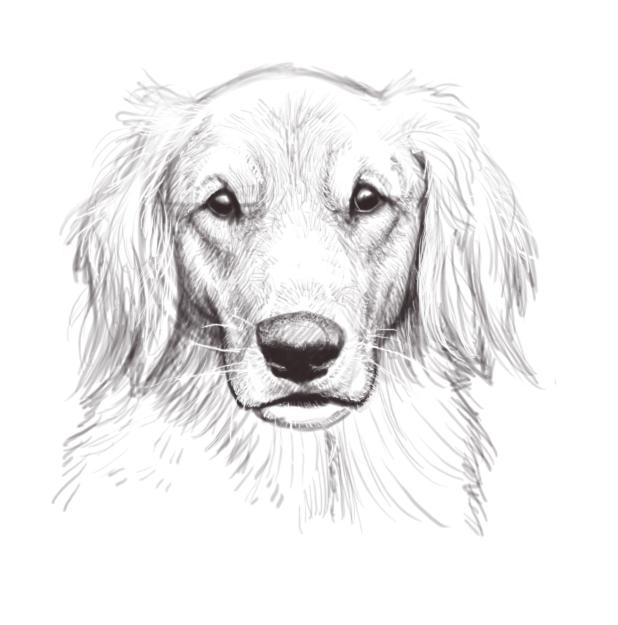 Dog Head Sketch By Firequill On DeviantArt