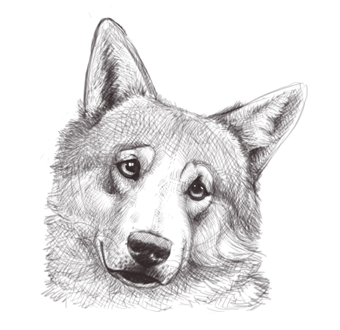 Drawings Of Wolves: Wolf Head Sketch By Firequill On DeviantArt