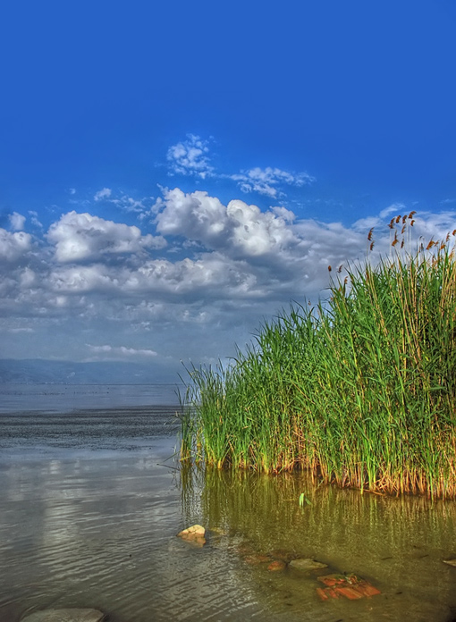 lake by ivyblue
