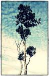 Lofoten 11