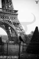 A Crow Around Eiffel by bulentcalli
