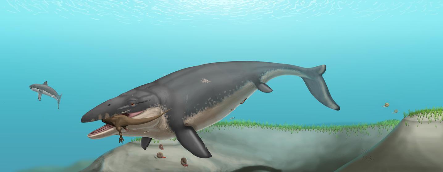Mosasaurus hoffmanni by Batavotyrannus