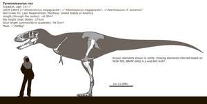 Subadult Tyrannosaurus skeletal diagram