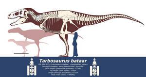Tarbosaurus bataar skeleton