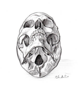 Sketchtember 10- Skull 10