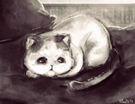 Ey, Kitty