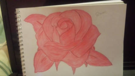 A rose for my lost love. .