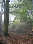 Forest 4