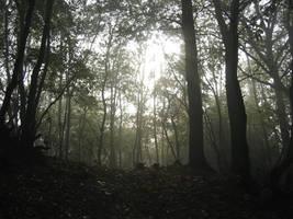 Forest 8 by Kiwiaa-Stock