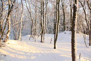 Winter 13 by Kiwiaa-Stock