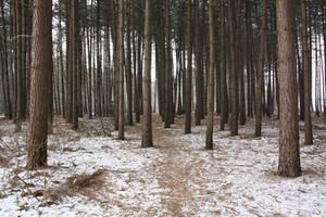 Winter forest 6 by Kiwiaa-Stock