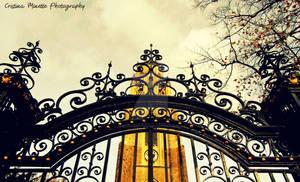 Intri-gate