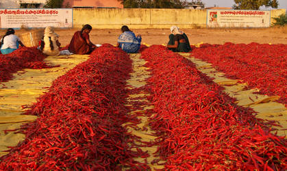Fiery Hot Red Chillies