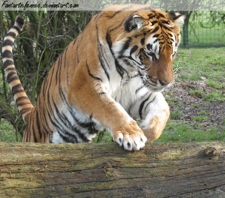 Tiger Leap by FantasticFennec