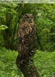 Woodland Owl by FantasticFennec