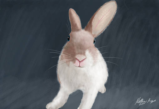 Another bunny