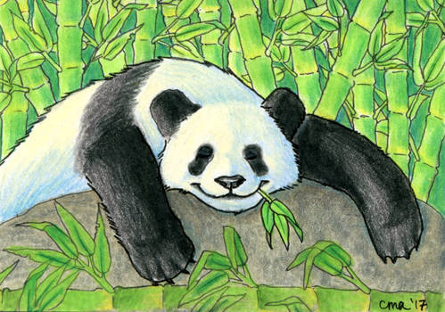 ACEO: Bamboo Connoisseur