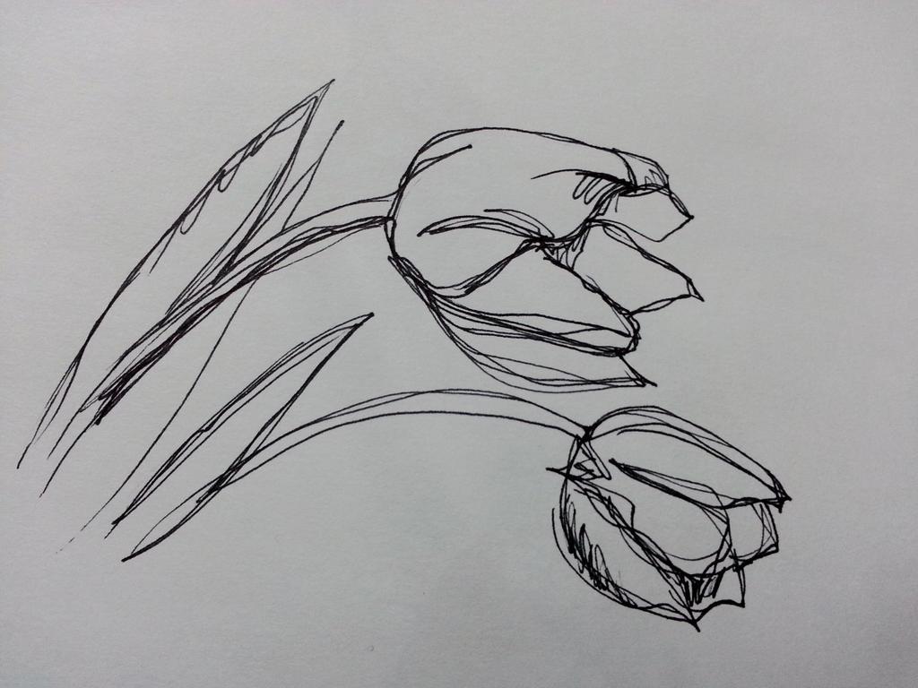 Contour Line Drawing Th Grade : Art is basic teacher contour line shells