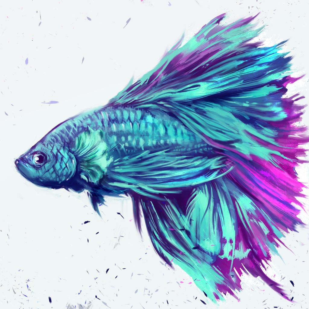 Betta splendens by shimhaq98 on DeviantArt  Betta Fish Drawings