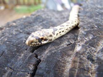 a snake... by xXxEMOxXxVEGANxXx