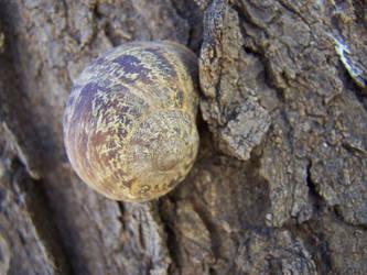 hiding in a shell... by xXxEMOxXxVEGANxXx