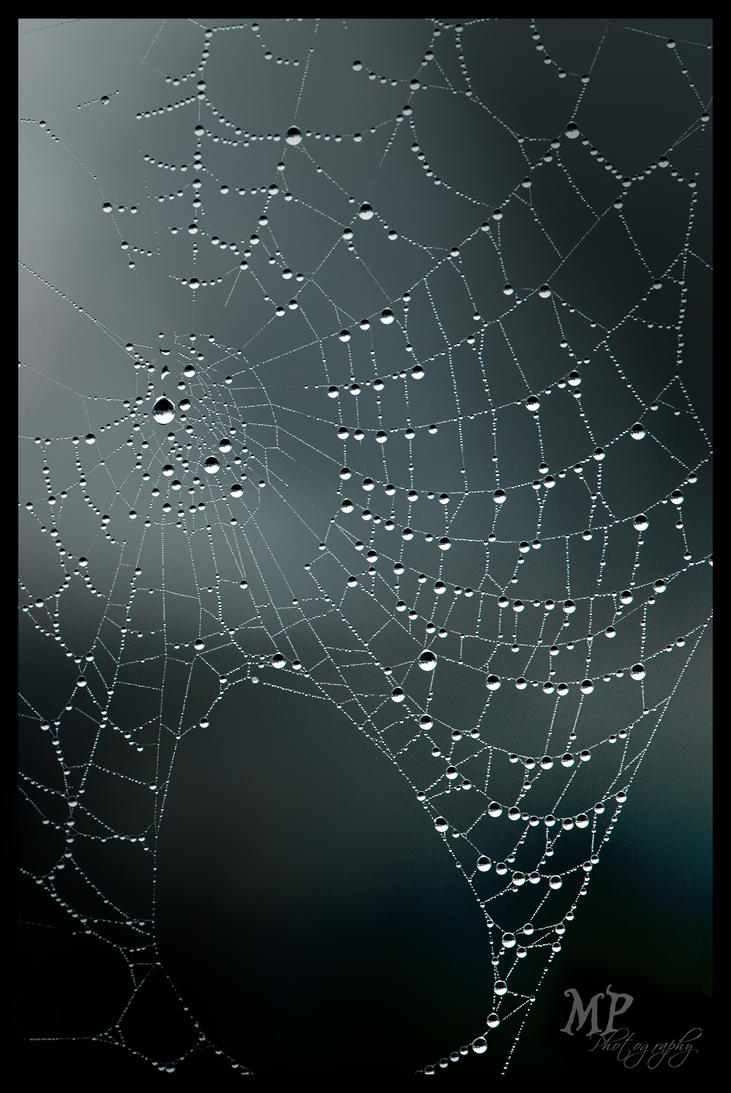 -55- Spider's Web by MiriamPeuser