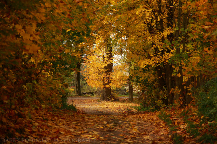 Polish Golden Autumn by MindShelves