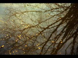 golden dots by MindShelves