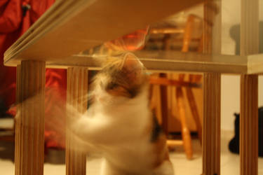 My Cat is Energetic by r41nb0w