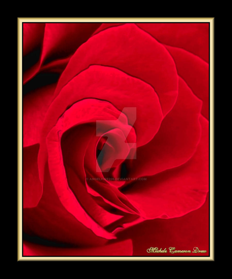 The_Rose