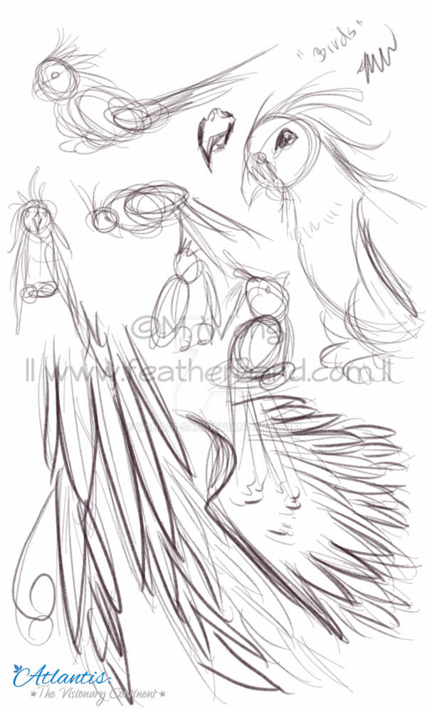 Bird Study by yanagi-san on DeviantArt