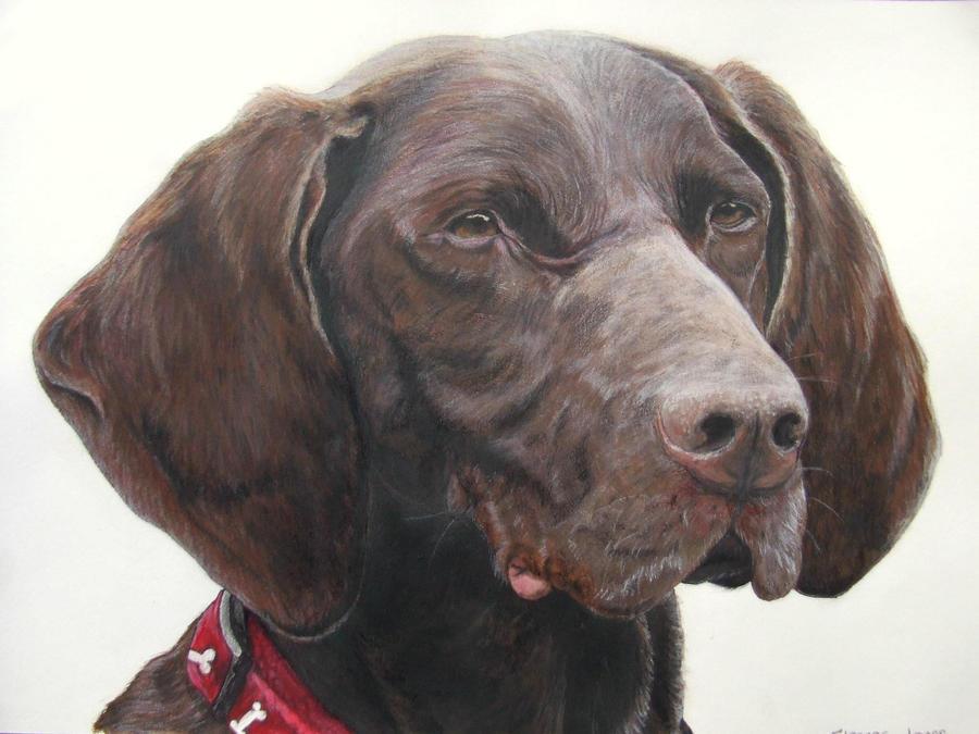 Dog Portrait by Hellequeen