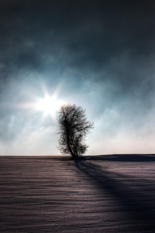 Winter Sun by Saber1705