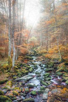 Herbst In Der Saussbachklamm