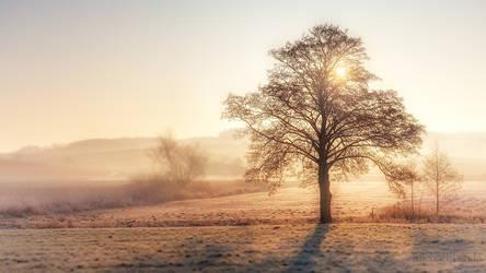 Morgensonne by Saber1705