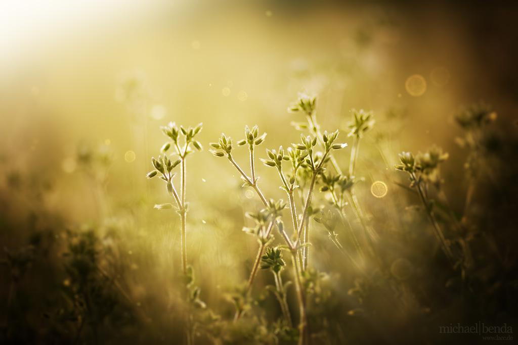 In der Fruehlingssonne by Saber1705