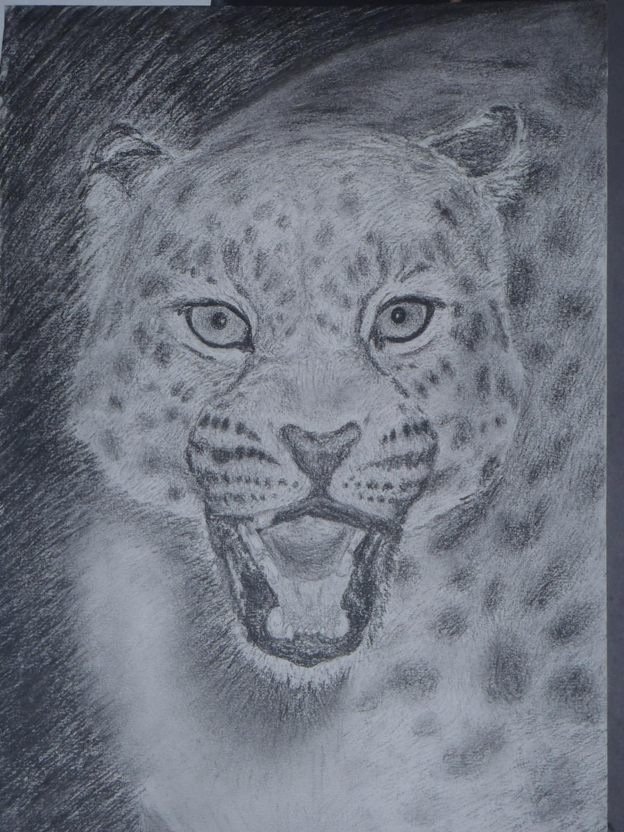 leopard by frucht1