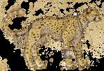 Fancy Cheetah by IzaPug