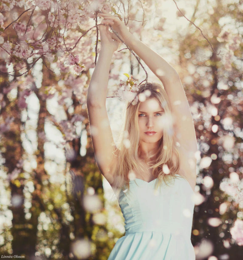 Petals by Vanilladisaster